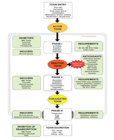 Liver-detox-chart