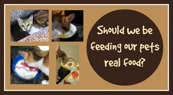 Should we be feeding our pets real food Loula Natural