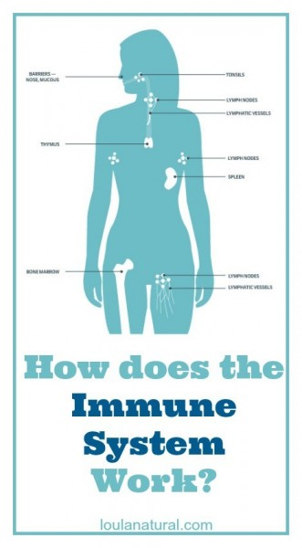 How does the Immune System Work Loula Natural pin