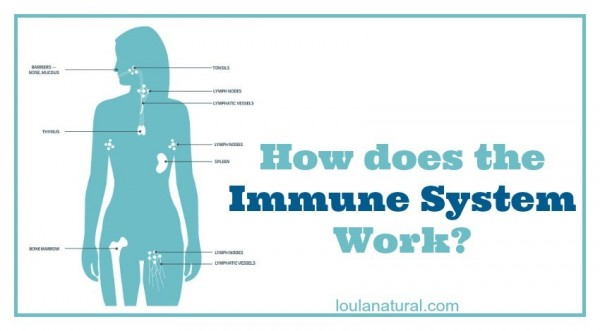 How does the Immune System Work Loula Natural